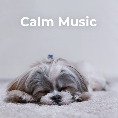 Calm Music for Dogs and Cats