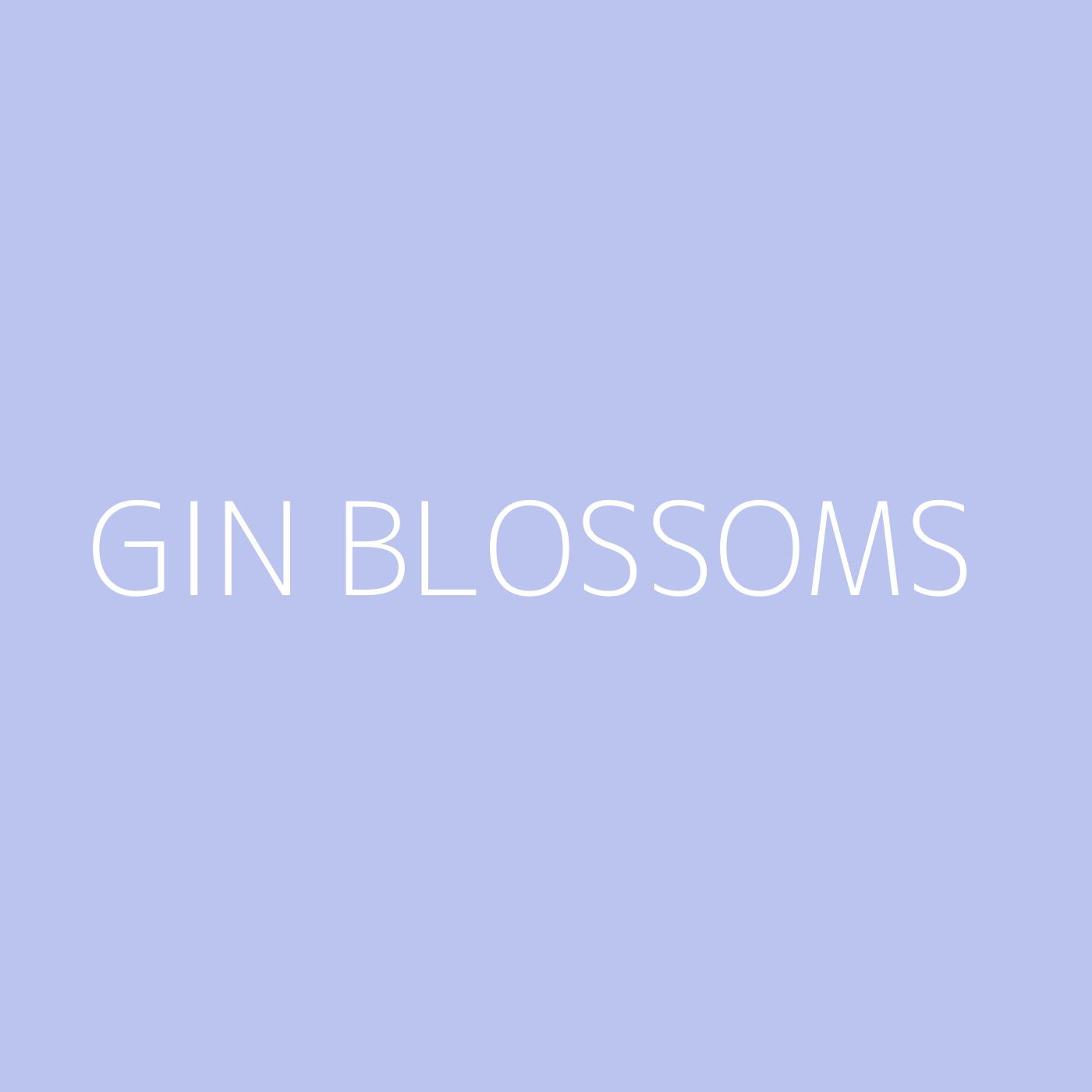 Gin Blossoms Playlist Artwork