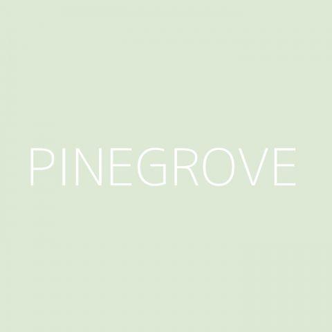 Pinegrove Playlist – Most Popular