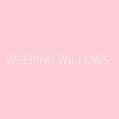 Weeping Willows Playlist – Most Popular